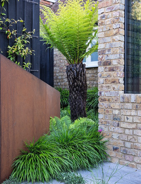 n awkward corner is turned into a stylish set piece with a tree fern (Dicksonia antarctica) rising from a sea of Hakonechloa macra and ferns