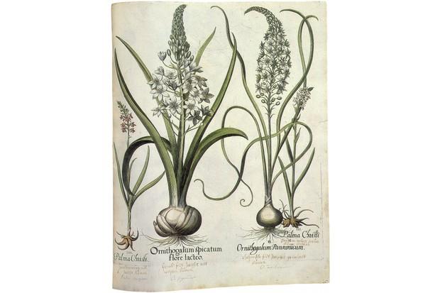 Botanical print