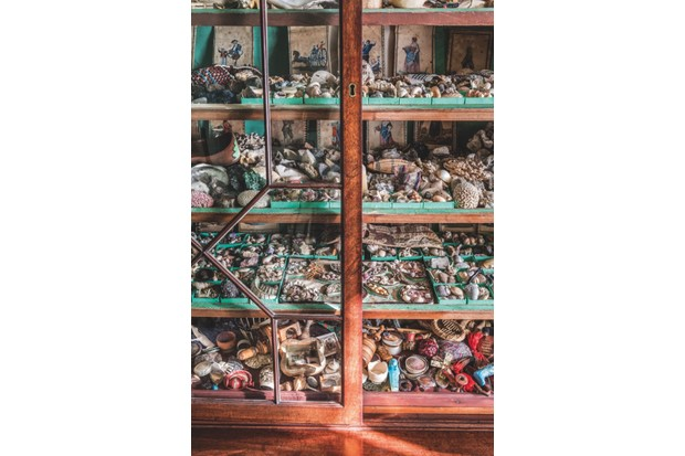 A close-up shot of a cabinet in the Library at A La Ronde, filled with hundreds of shells in various sizes