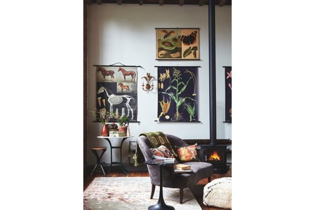 A living room with a woodburner and botanical charts on the wall