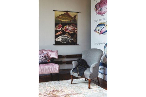 A corner of a living room with a grey armchair, pink satin sofa and vintage wall charts featuring fish and sea creatures
