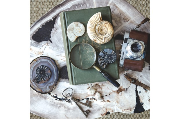 Slices of agate, fossils, vintage books and curios on a petrified wood table