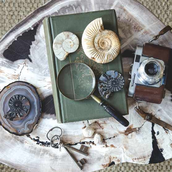 Furniture: 'Petra' petrified wood side table, £595, The Sofa and Chair Company  Fossils and objects: (from left) agate coaster, £96 for set of four, Keir Townsend. Polished ammonite slice, £7.99 per pair (one shown), Junior Geo. Vintage keys, £8 each, Briggs & Oliver. Vintage book, from a selection; magnifying glass, £20, both Briggs & Oliver. Polished ammonite slice (limestone), £7.99; complete ammonite, £19; polished ammonite slice (blue-grey), £7.99 per pair; pair of fossil brachiopods, £3.99 for 20, all Junior Geo. Vintage camera, find similar at Briggs & Oliver