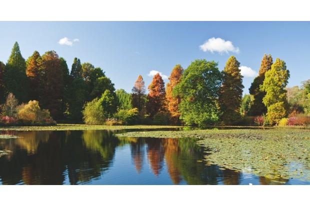 An image of a lake at Bedgebury National Pinetum