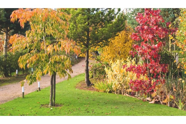 An image of a tree at the 9-acre Arboretum, Bluebell Arboretum & Nursery, Smisby