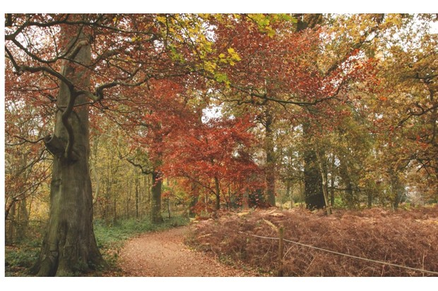 A path through the trees in Harcourt Arboretum