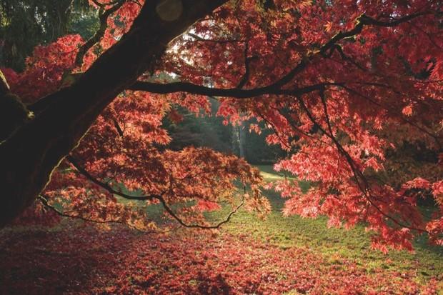 An image of sunlight shining through a tree at Westonbirt Arboretum