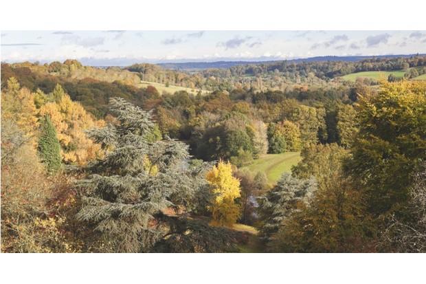 An aerial shot of Winkworth Arboretum Park