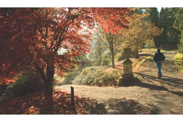 An image of a walker in Dawyck Botanic Garden