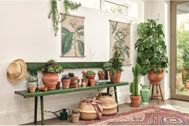 House plants in rustic terracotta pots on an antique green bench.