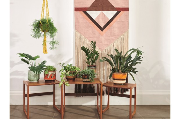 A range of house plants on wicker side tables in front of a large macrame wall hanging.