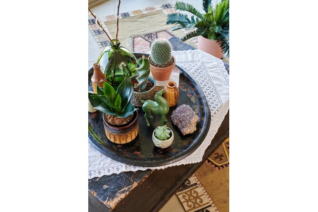 A selection of succulents, cacti, crystals and curios on an antique wood tray.