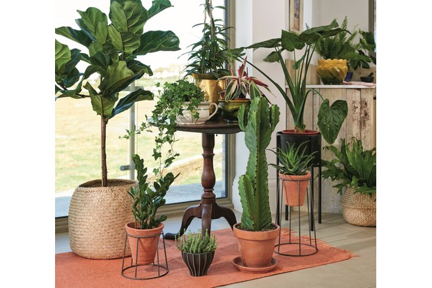 A display of plants, including a fiddle leaf fig, a trailing plant and a cacti, in front of sliding patio doors.