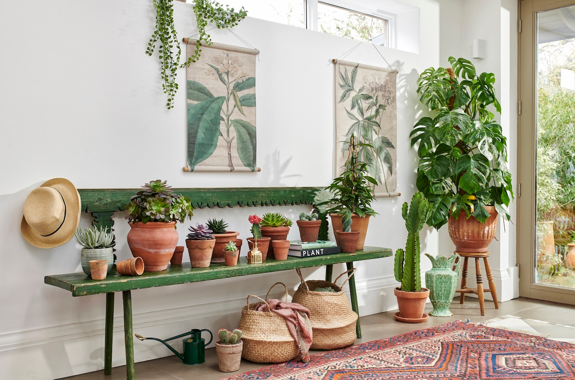 Antiques and plants