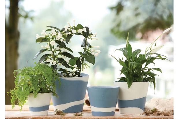 Wedgwood's Burlington pots filled with fresh foliage