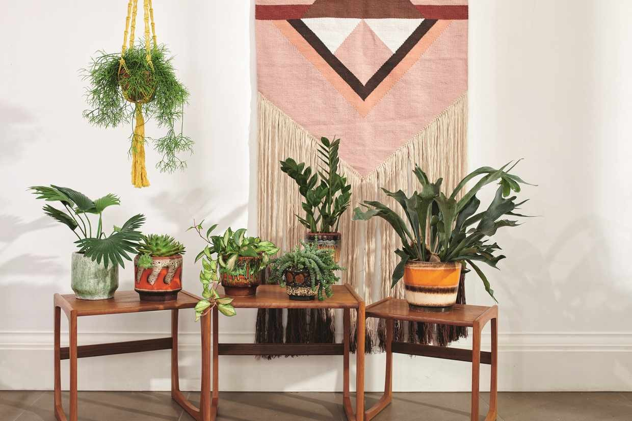 Plant feature shot on location
