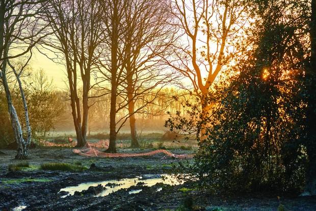 Winter sunrise at RHS Garden Bridgewater