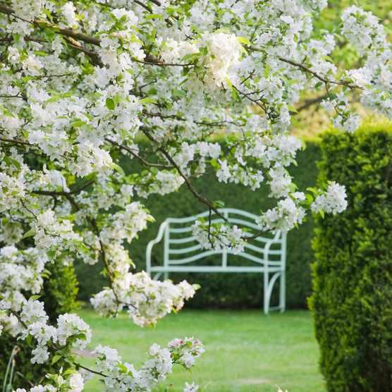 National Garden Scheme gardens to remain open virtually