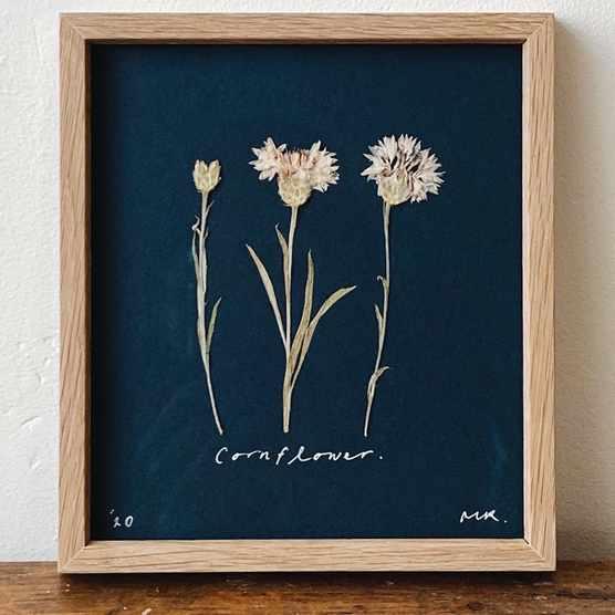 Framed Pressed Cornflower Artwork, £50, MR Studio London.