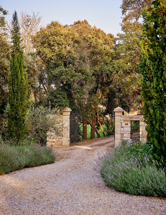 Banks of lavender flank the stone gateway to the farm, which opens onto a driveway lined by ancient trees.