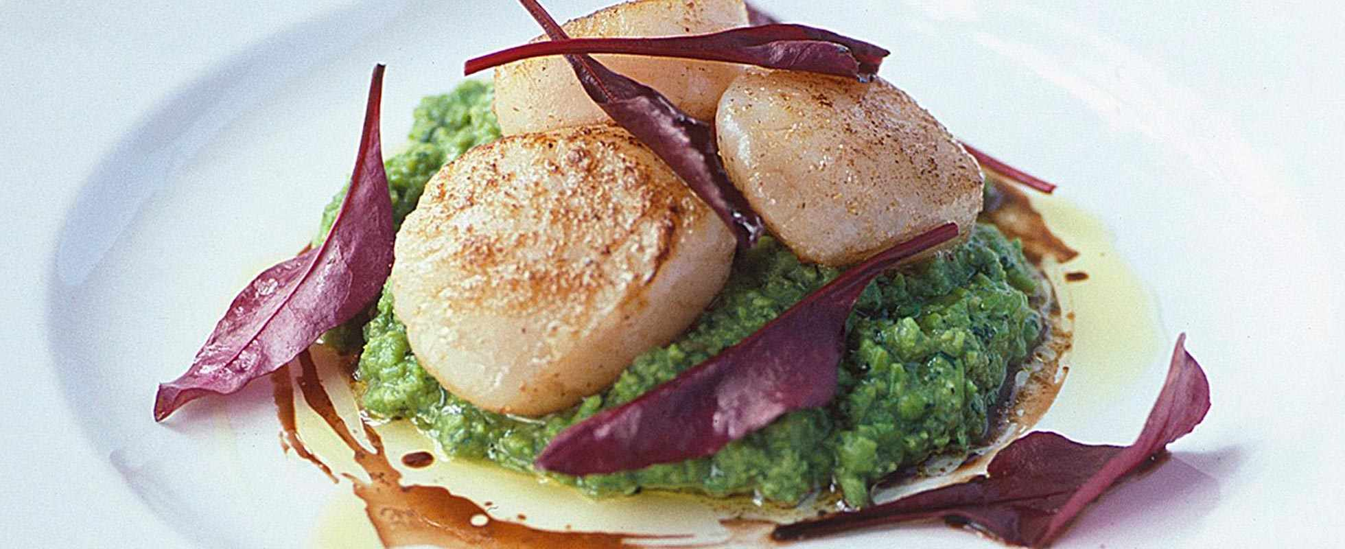 Scallops with pea and mint puree