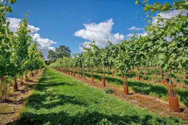 Wine Tasting Breaks UK and English Vineyard Tours