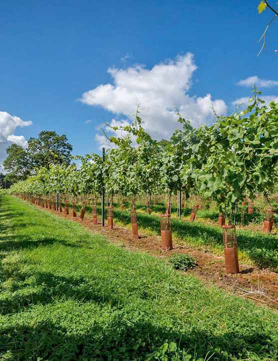 Wine Tasting Breaks UK and English Vineyard Tours