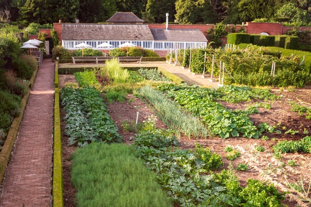 Kitchen garden with crops growing