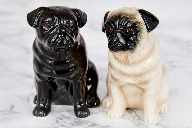 salt and pepper pugs