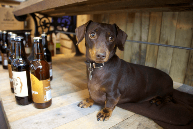 Bison beer crafthouse sausage dog