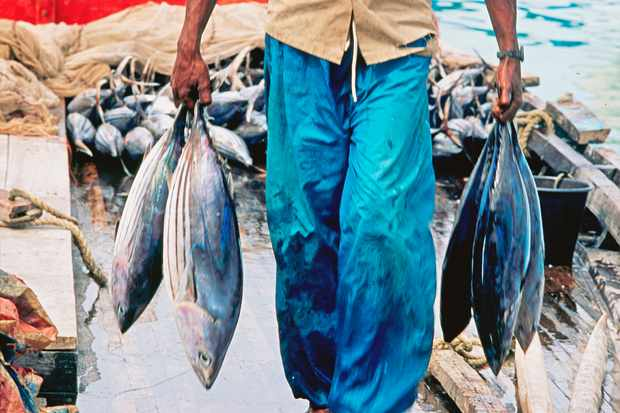 Man carrying fishes in the maldives