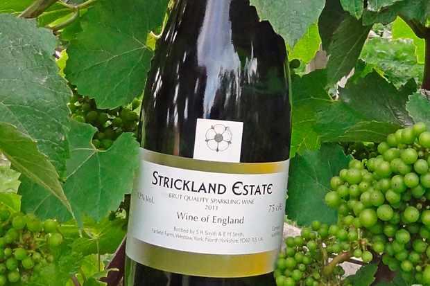 grape britain a tour of britains vineyards