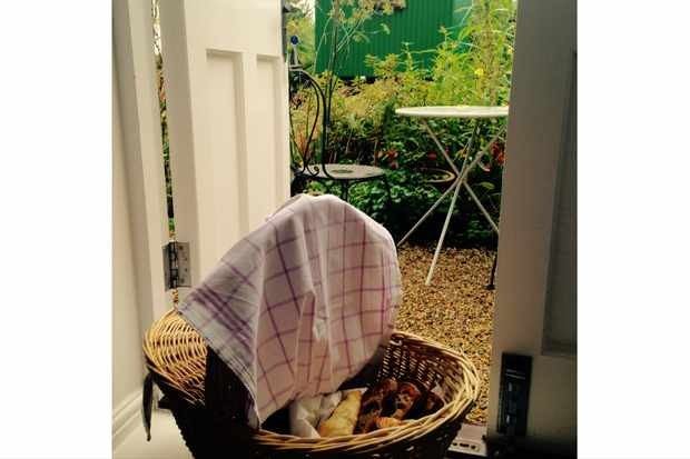 A breakfast hamper filled with pasties at The Wash House Studio B&B in Orford, with a patio area in the background
