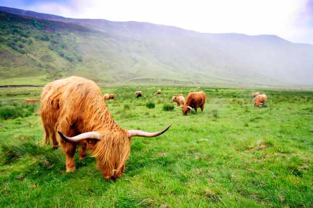 Aladale Scotland