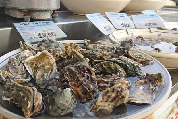 oysters Gallipoli fish market