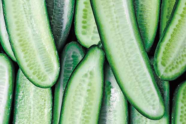 Dill pickles - Cucumbers