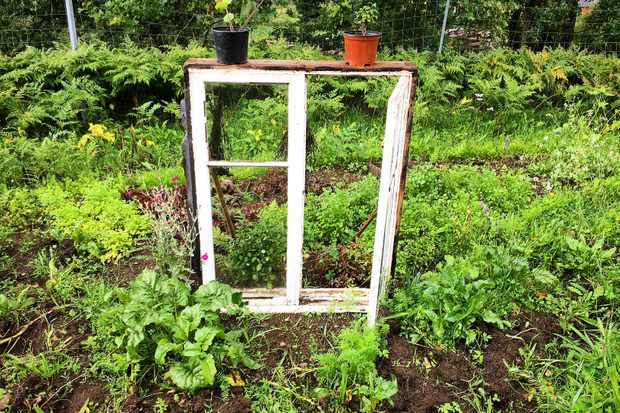 Frame in allotment surrounded by greenery
