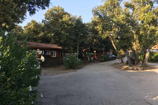 Wooden lodge with lots of green trees and blue sky at the Eurocamp