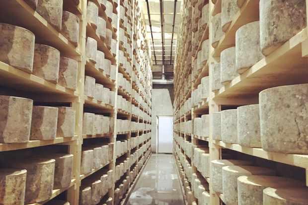 Westcombe dairy cheese