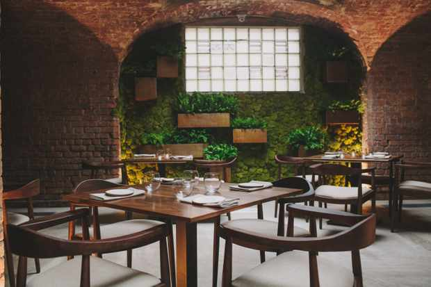 Close up of the seating at Alchemilla, Nottingham. Dark wooden mid-century-style tables and chairs are spaced nicely apart from each other. Ahead is a living walls covered in plants with a large window