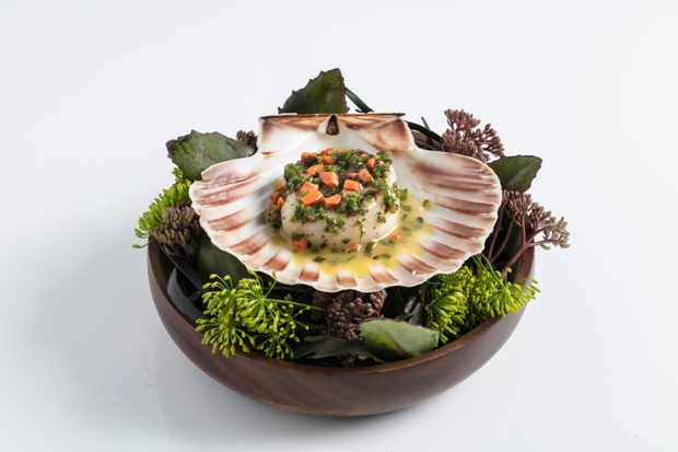 Isle of Mull scallop sitting on a large shell and under plenty of greenery