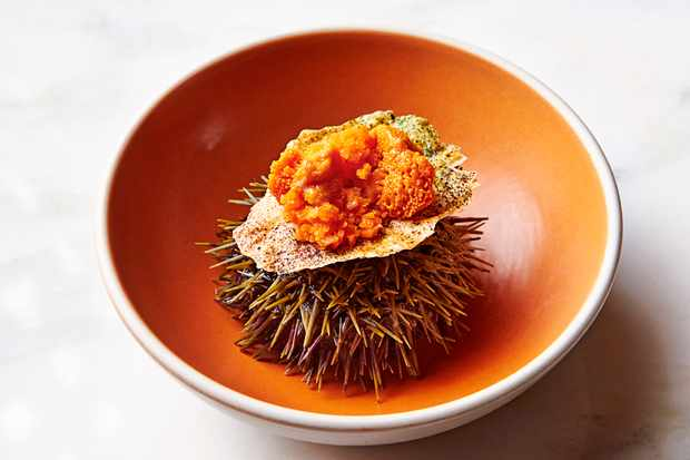 Sea urchin and carrots