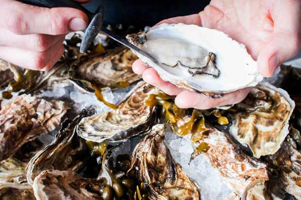 Oysters | White Horse Oyster and Seafood Bar