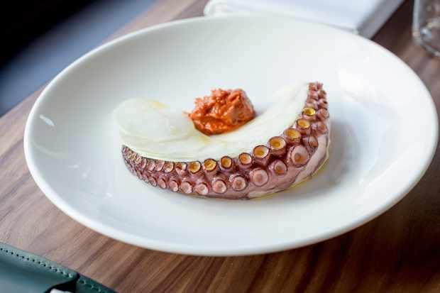 Octopus, Londrino, London