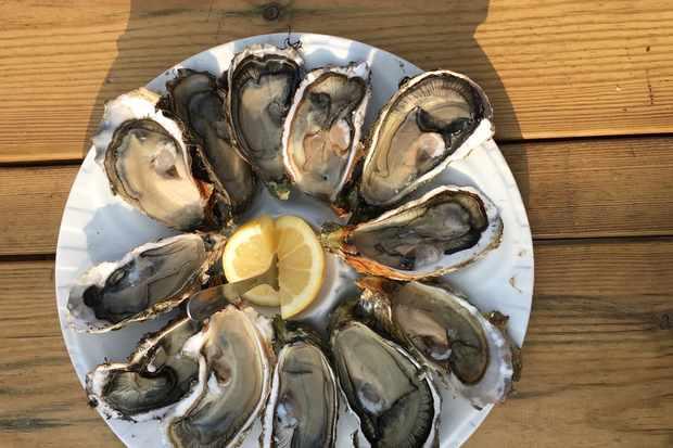 Oysters in gujan mestras