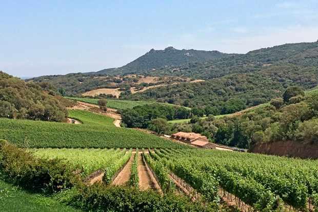 Siddura vineyard
