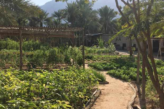 The Kitchen Garden Six Senses Zighy Bay