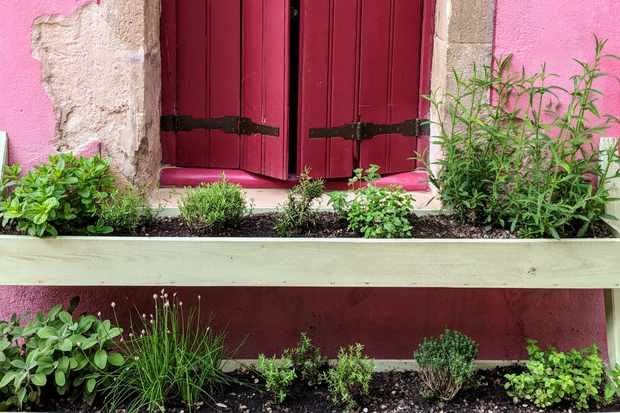 Pink shutters that open out onto window boxes filled with herbs