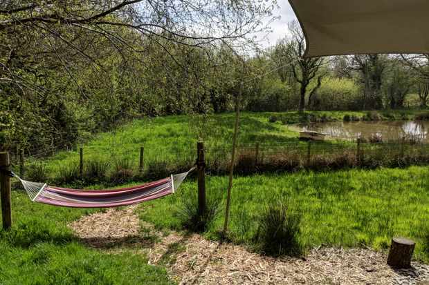 Hammocks hanging next to the ponds at One Cat Farm, Wales