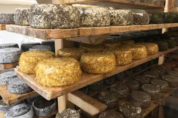 Raw cheese coated in herbs at The Zoff biodynamic farm